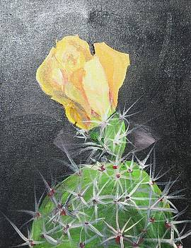 Yellow Cactus Blossom by Carolyn Speer