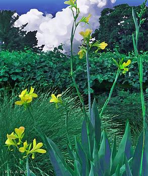 Yellow Canna by David Klaboe