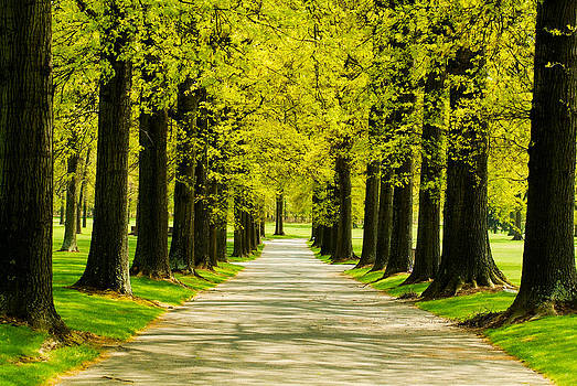 Yellow Canopy by Tom Wenger