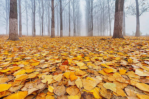 Yellow Carpet by Evgeni Dinev