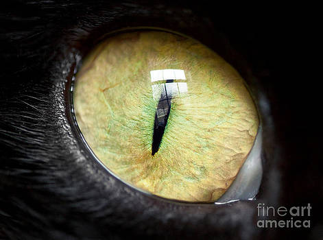 Yellow Cat Eye by Sharon Dominick