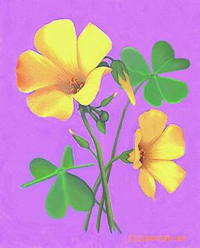 Yellow Clover Flowers by Sophia Schmierer