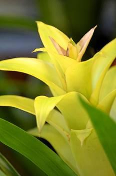 Maria Urso  - Yellow Cream Tropical