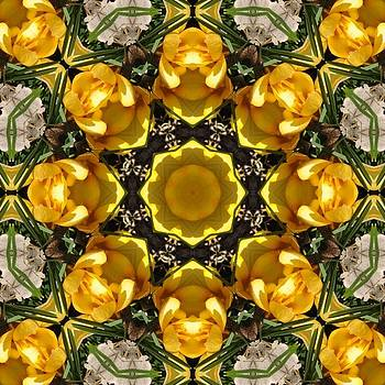 Valerie Kirkwood - Yellow Crocus Kaleidoscope