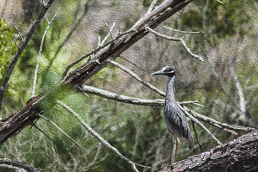 Yellow Crowned Night Heron by Frank Feliciano