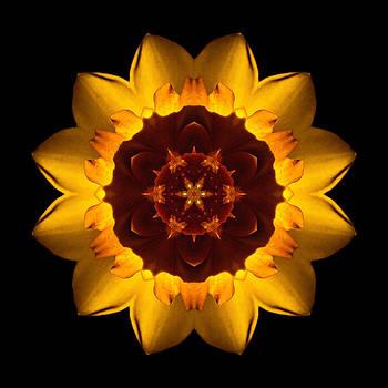 Yellow Daffodil I Flower Mandala by David J Bookbinder