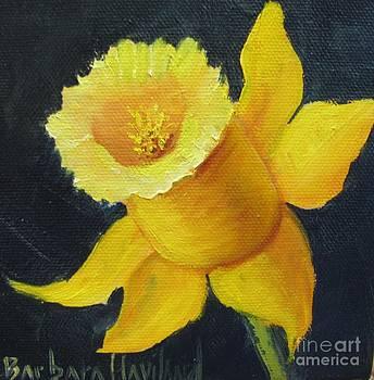 Yellow Daffodil on Navy by Barbara Haviland