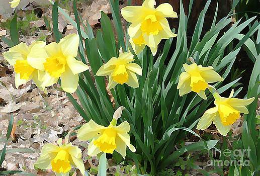 Yellow Daffodils by Judy Palkimas