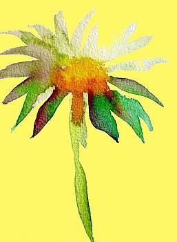 Yellow Daisy by Sacha Grossel