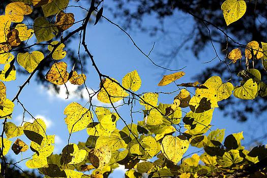 Yellow by Daniel Rogers