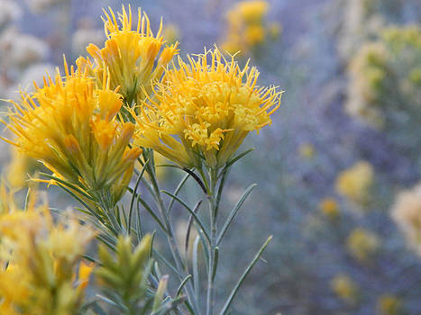 Yellow Desert Bouquet by Justyne Moore