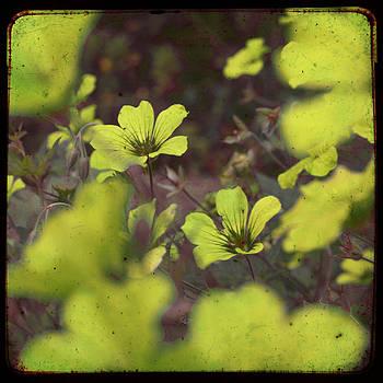 Georgia Fowler - Yellow Flower Madness