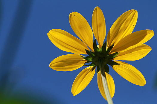 Yellow Flower by Philip Neelamegam