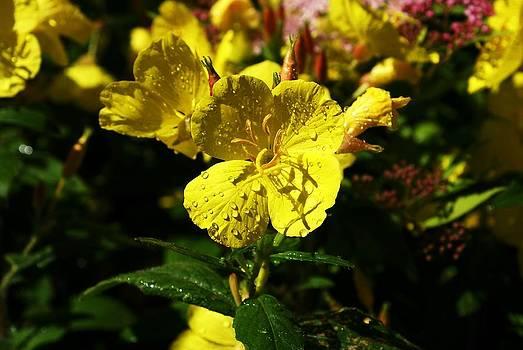 Yellow Flower by Pierre Labrosse