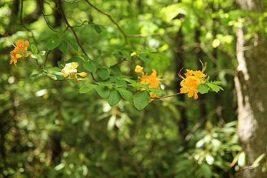 Yellow Flower Tree by Dulce Levitz