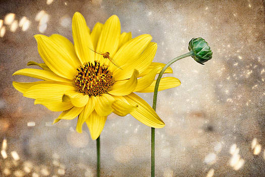 Yellow Flower by Zoran Buletic