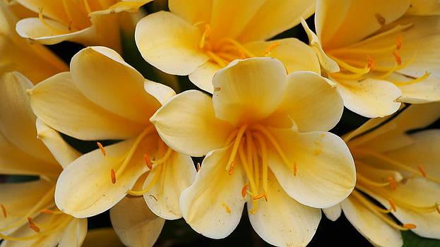 Yellow Flowers 1 by Amanda Peik