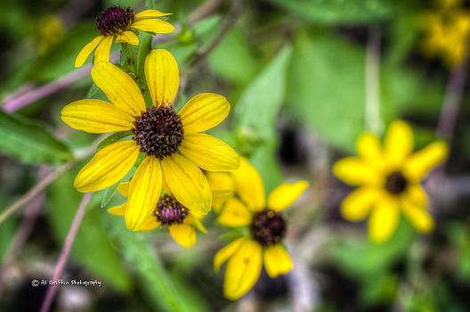 Yellow Flowers by Al Griffin