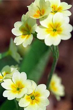 Harold E McCray - Yellow flowers