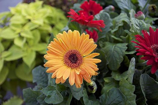 Yellow flowers by Jocelyne Choquette