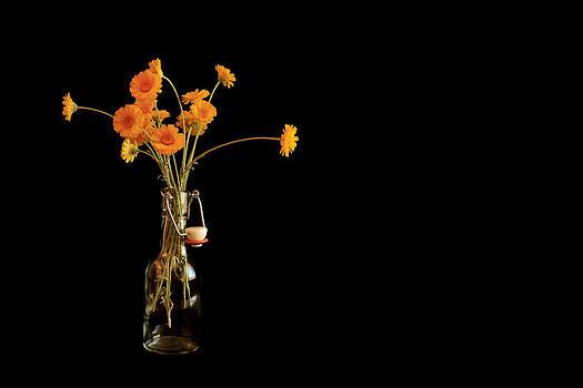 Orange Flowers on Black Background by Don Gradner