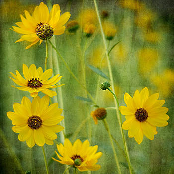 Yellow Flowers by Zoran Buletic