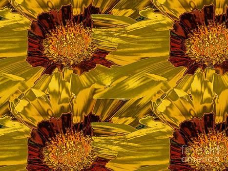 Yellow Gazanias 4 by Dana Hermanova