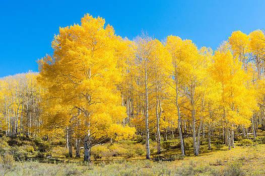 Yellow Glow by Randy Giesbrecht