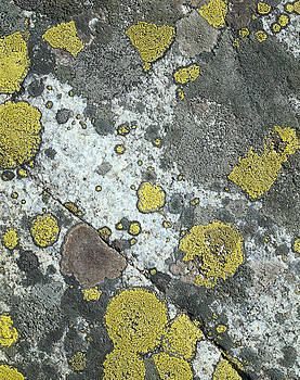 Yellow-gray stone by Efim Chernov