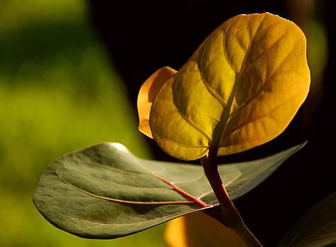 Yellow-Green by Lorenzo Cassina
