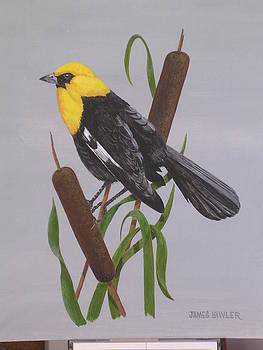 Yellow-Headed Blackbird by James Lawler