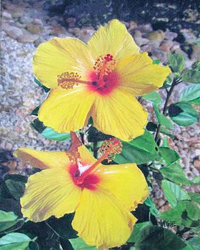 Angie Hamlin - Yellow Hibiscus