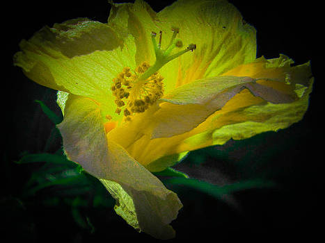 Christy Usilton - Yellow Hibiscus