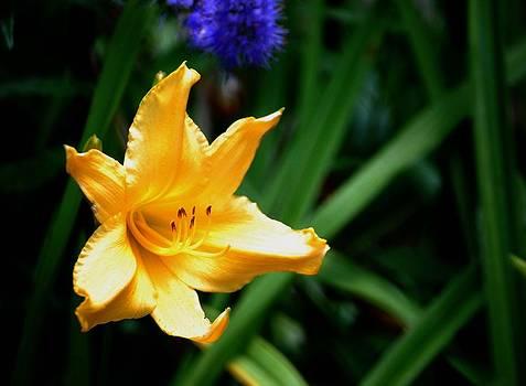 Gary Wonning - Yellow Hibiscus