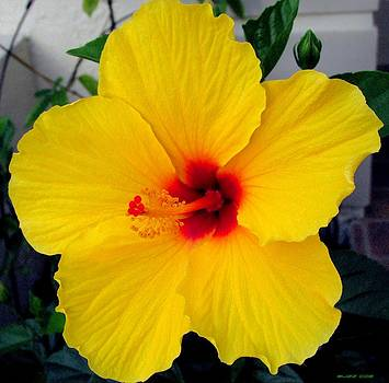 Buzz  Coe - Yellow Hibiscus I