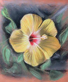 Yellow Hibiscus by Melinda Saminski