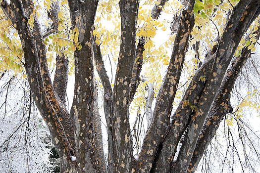 Yellow in Winter by Ross Odom