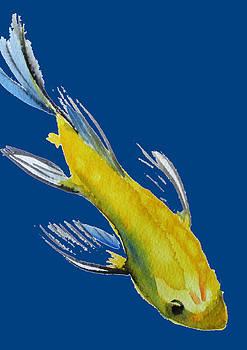 Yellow Koi by Sacha Grossel