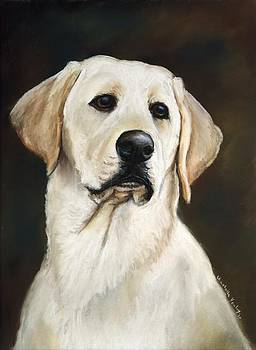 Yellow Labrador Retriever by Charlotte Yealey