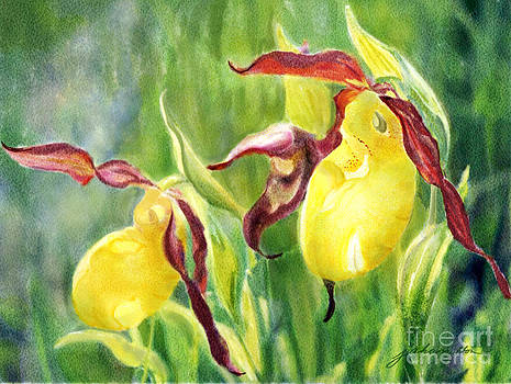 Yellow Lady Slippers by Joan A Hamilton
