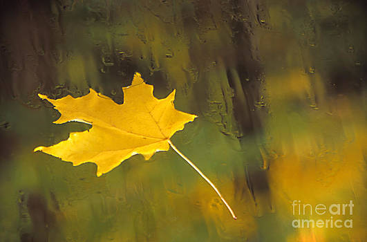 Yellow Leaf by Eva Kato