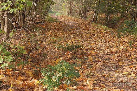 Yellow Leaf Road 4 by Carol Lynch