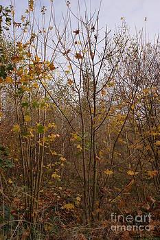 Yellow Leaf Road 5 by Carol Lynch