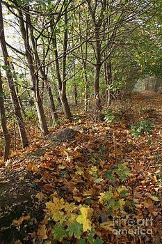 Yellow Leaf Road 6 by Carol Lynch