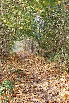 Yellow Leaf Road 9 by Carol Lynch