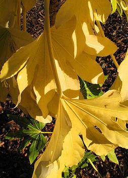 Yellow Leaves by Barbara Chachibaya