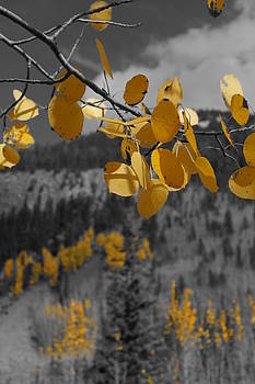 Julie Grandfield - Yellow Leaves
