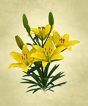 Jane McIlroy - Yellow Lilies