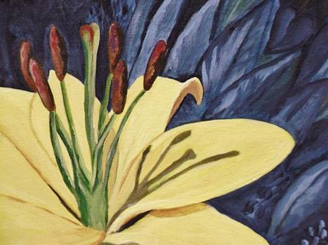 Yellow Lilly by Faye Silliman