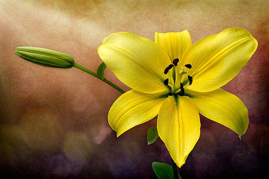 Yellow Lily by Zoran Buletic